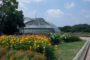温室 京都府立植物園の写真素材 [FYI03957967]