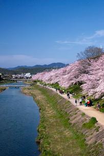 高野川と桜並木の写真素材 [FYI03958114]