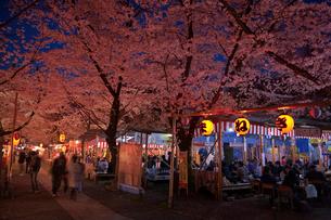 平野神社 夜桜と花見の写真素材 [FYI03958117]