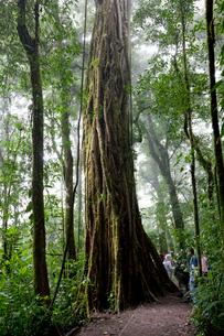 熱帯雲霧林の写真素材 [FYI03958357]