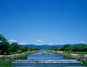 新緑の賀茂川の写真素材 [FYI03958384]