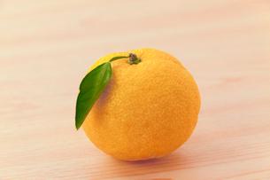 柚子の写真素材 [FYI03958582]