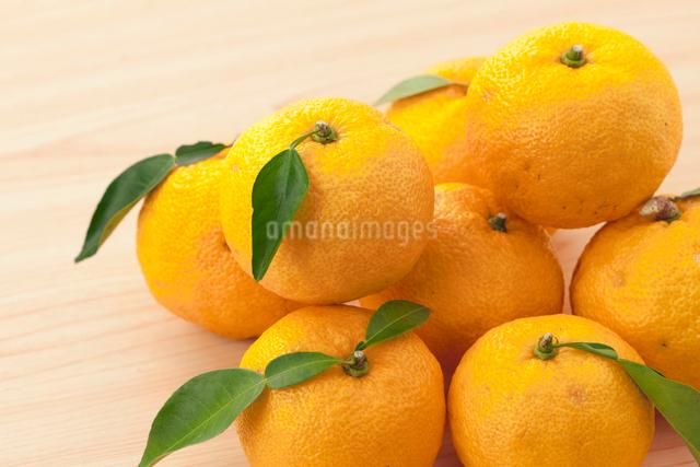 柚子の写真素材 [FYI03958585]