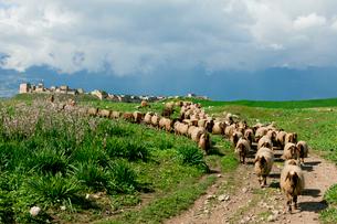 羊とアラブ城の写真素材 [FYI03958784]