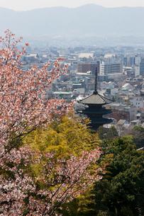 桜と八坂の塔の写真素材 [FYI03958828]