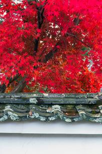 土塀とモミジの写真素材 [FYI03959262]