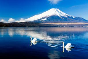 山中湖 富士山の写真素材 [FYI03959273]