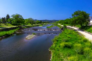 鴨川の写真素材 [FYI03959323]