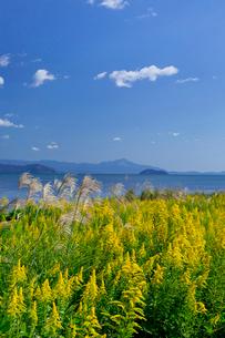 琵琶湖 竹生島の写真素材 [FYI03959435]