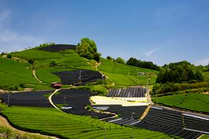 茶畑の写真素材 [FYI03959574]