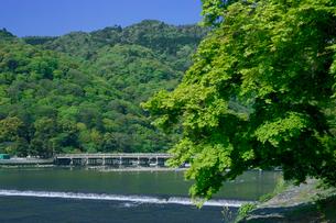 嵐山 渡月橋の写真素材 [FYI03959589]