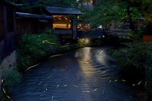 祇園白川 蛍の写真素材 [FYI03959617]