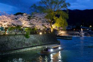 岡崎宵桜回廊ライトアップの写真素材 [FYI03959926]