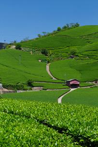 茶畑の写真素材 [FYI03959955]