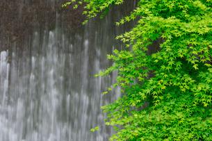 新緑と流れの写真素材 [FYI03959965]