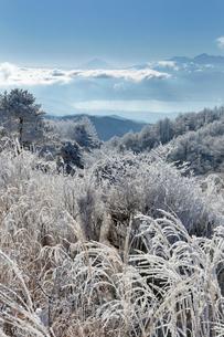 高ボッチからの富士山の写真素材 [FYI03960134]
