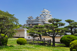 新緑の姫路城の写真素材 [FYI03960259]