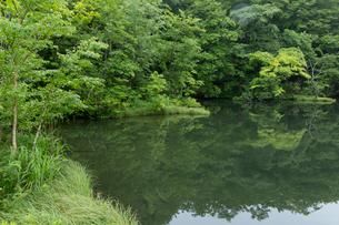 蔦沼の写真素材 [FYI03960338]