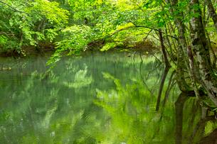 池と新緑の写真素材 [FYI03960341]