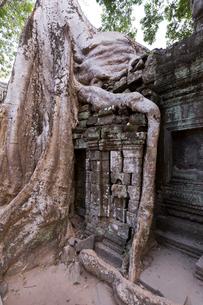タ・プローム寺院の写真素材 [FYI03960667]