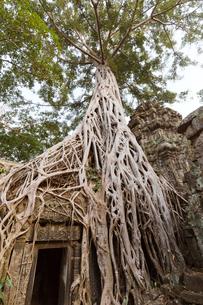 タ・プローム寺院の写真素材 [FYI03960669]