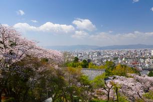 京都市内遠望 桜の写真素材 [FYI03960776]