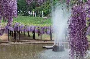 白井大町藤公園 噴水の写真素材 [FYI03960810]