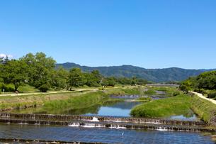 賀茂川の写真素材 [FYI03960961]
