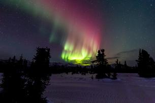 アラスカ フェアバンクスのチェナ山頂から見たオーロラの写真素材 [FYI03961305]