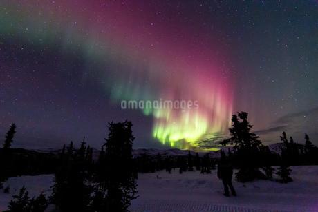 アラスカ フェアバンクスのチェナ山頂から見たオーロラの写真素材 [FYI03961324]