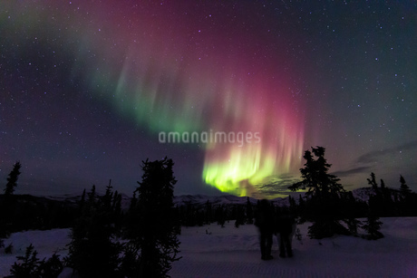 アラスカ フェアバンクスのチェナ山頂から見たオーロラの写真素材 [FYI03961326]