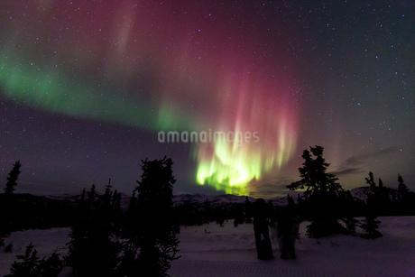 アラスカ フェアバンクスのチェナ山頂から見たオーロラの写真素材 [FYI03961329]