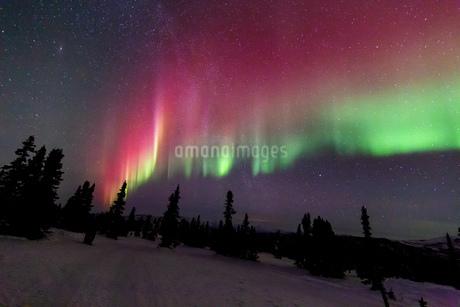 アラスカ フェアバンクスのチェナ山頂から見たオーロラの写真素材 [FYI03961348]