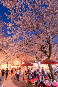 平野神社 夜桜の写真素材 [FYI03961385]