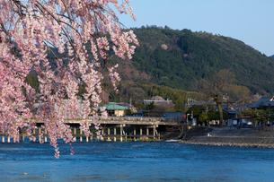 小倉山と桜の写真素材 [FYI03961392]