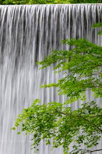 木谷沢渓流 新緑と流れの写真素材 [FYI03961433]