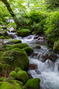 木谷沢渓流 流れの写真素材 [FYI03961435]