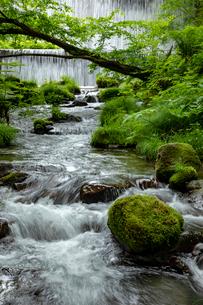 木谷沢渓流 流れの写真素材 [FYI03961436]