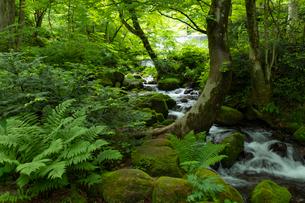 木谷沢渓流 流れの写真素材 [FYI03961439]