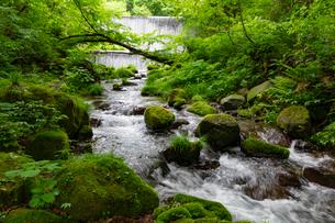 木谷沢渓流 流れの写真素材 [FYI03961440]