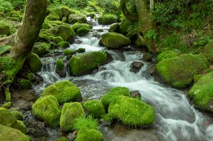 木谷沢渓流 流れの写真素材 [FYI03961442]