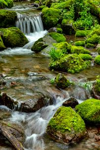 木谷沢渓流 流れの写真素材 [FYI03961444]