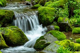 木谷沢渓流 流れの写真素材 [FYI03961445]
