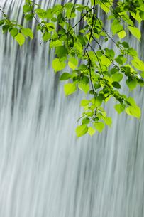 新緑と流れの写真素材 [FYI03961447]