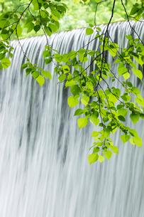 新緑と流れの写真素材 [FYI03961448]