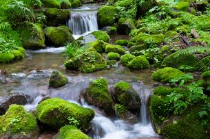 木谷沢渓流の写真素材 [FYI03961449]