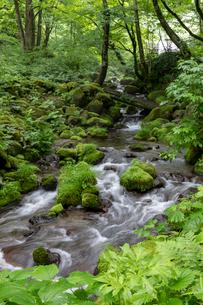 木谷沢渓流の写真素材 [FYI03961452]