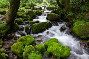 木谷沢渓流の写真素材 [FYI03961453]