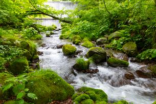 木谷沢渓流の写真素材 [FYI03961456]