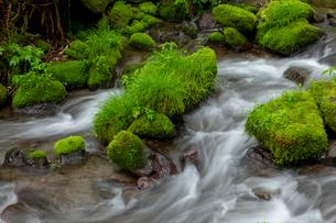 木谷沢渓流の写真素材 [FYI03961459]